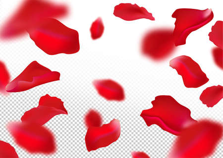Rose petals. Isolated on white background. Vector illustration.