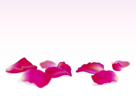 Petali di rosa. Isolato su sfondo bianco. Illustrazione vettoriale.