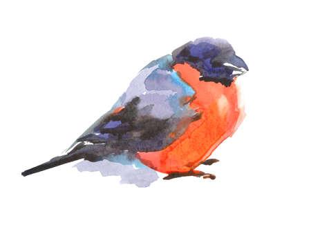 Bullfinch bird. Watercolor sketch. Isolated on a white background. Zdjęcie Seryjne