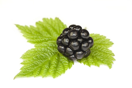 Blackberries with green leaves on a white background