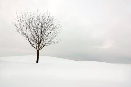 lonely tree in a snowy winter landscape
