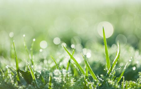 mirroring in the dewy green grass
