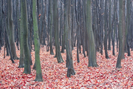 red-colored autumn leaves on the background of bare trees