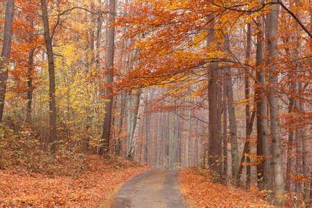 beech forest path