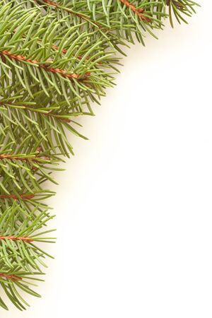 spruce branch on a white background Stock Photo