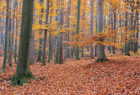 fairyland: colorful leaves in autumn forest Stock Photo