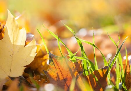 green grass with autumn colored background photo