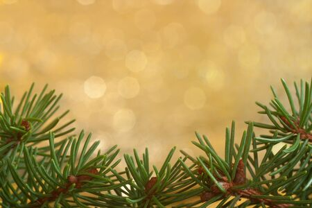 Spruce twigs with golden background Stock Photo