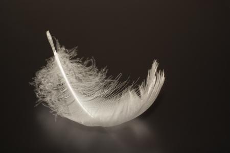 lightness: lightness and whiteness of bird feathers