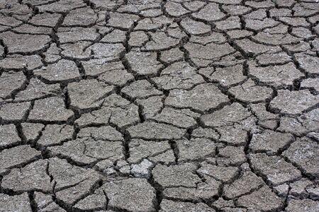 arid: Dry cracked arid barren land