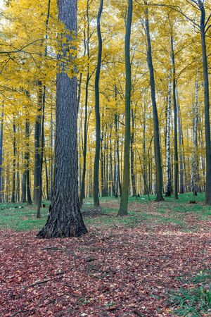 color autumn forest Stock Photo