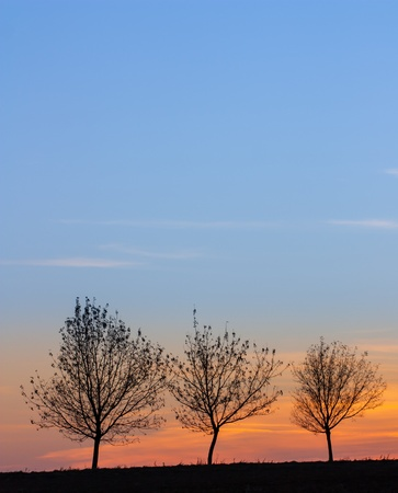 three trees at sunset with blue sky Stock Photo