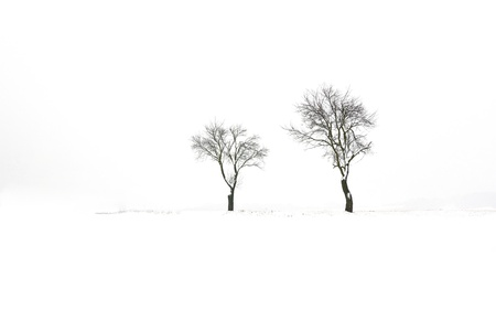 lonely trees in a snowy field
