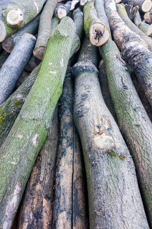 felled: felled trees in the forest Stock Photo