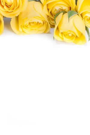 funeral background: yellow roses in a bunch isolated on a white background  Stock Photo