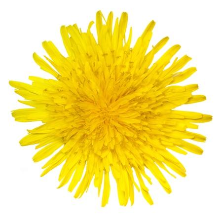 stamens: Dandelion flower on a white background Stock Photo