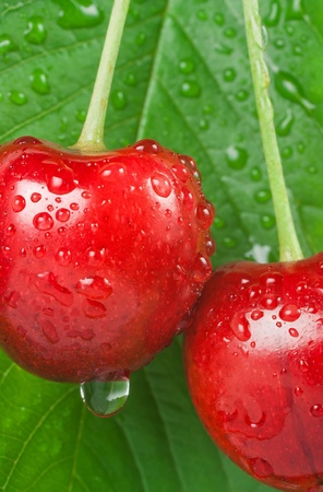 dewy cherry with leaf background