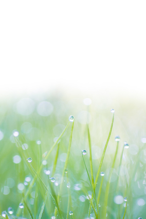 close up background of dewy grass photo