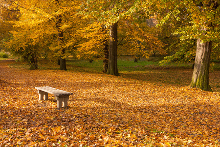 autumn colors in the park bench photo