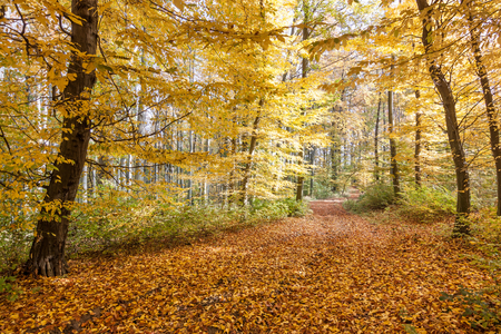 footpath with the colors yellow autumn forest