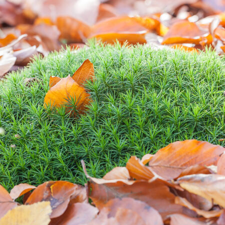 autumn leaves in green moss