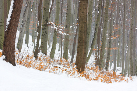 orange leaves in a snowy forest