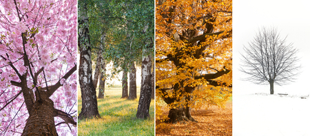 Spring, summer, autumn and winter in the nature photo