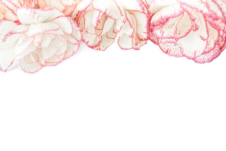 gillyflower: red and white carnations on a white