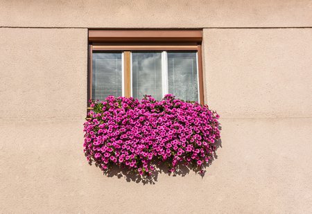 window with beautiful red flowers photo