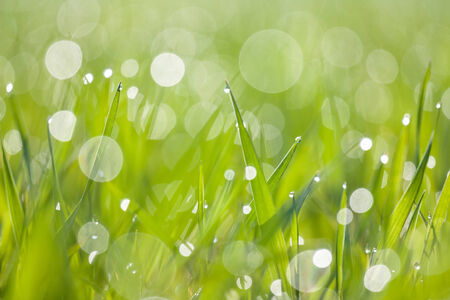 dewdrops: dewdrops in the morning green grass Stock Photo