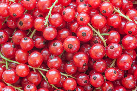 background of ripe red currants