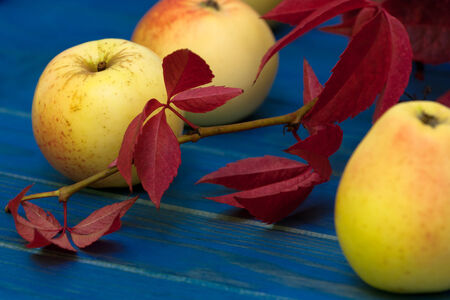 autumn still life with apples photo