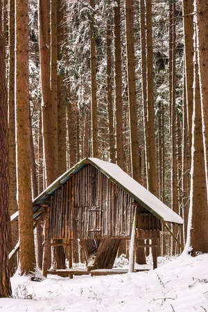 hay rack in the winter forest photo