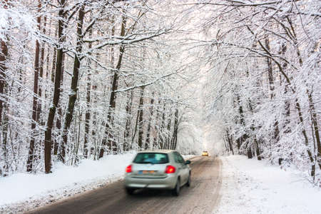 white winter: road in white winter forest