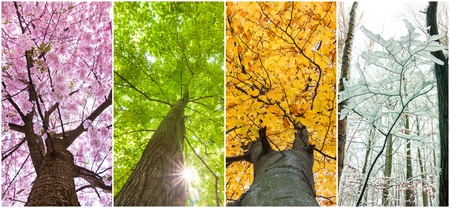 four seasons in the treetops