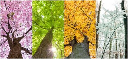 Cztery pory roku w koronach drzew