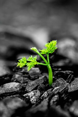 green plant growing from the ashes