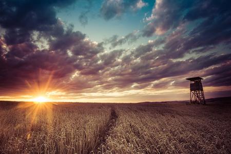 Jacht bos uitkijktoren in een veld bij zonsondergang Stockfoto - 43433362