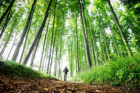 Waldpfad zwischen den schönen grünen Bäumen Standard-Bild - 43433467