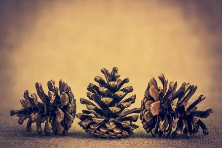 autumn color: pine cone on a brown background