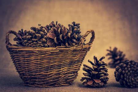 Pine cone: c�ne de pin sur un fond brun Banque d'images