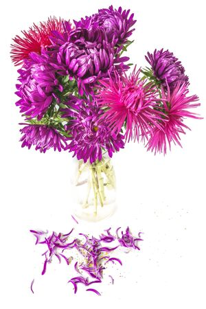 aster flowers: purple aster flowers in a vase on a white background Stock Photo