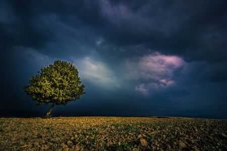 lone tree in a field before the storm Stock Photo