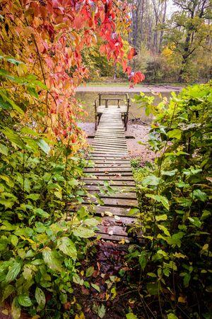 fall landscape: wooden pier at Autumn Pond