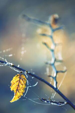 cobwebs: autumn leaf with corals cobwebs
