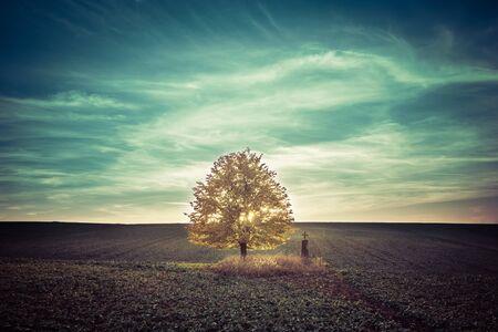 hojas de arbol: tilo amarillo de oto�o solitaria en el campo Foto de archivo