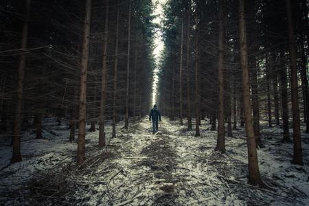 white winter: winter walk snow white forest Stock Photo