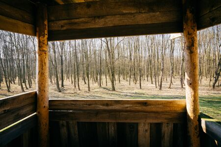 view of the forest high hide