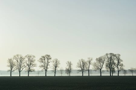 avenue of deciduous trees in plowing fields Stock Photo