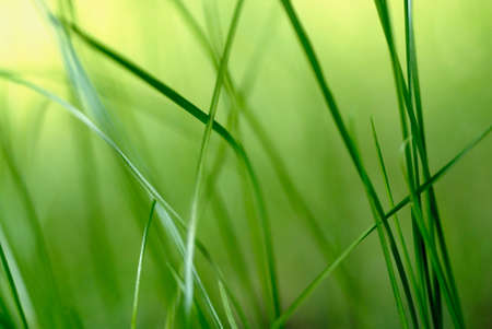 underbrush: green blades of grass Stock Photo